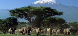 Majestic Amboseli Safari