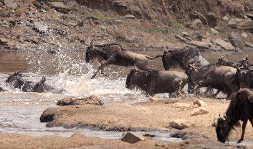 3 Days Maasai Mara Safaris