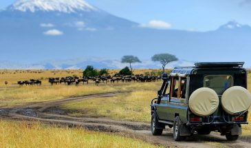 3 Days Amboseli Tour