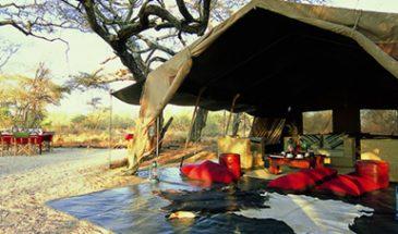 12 Days Bush and Beach Safari
