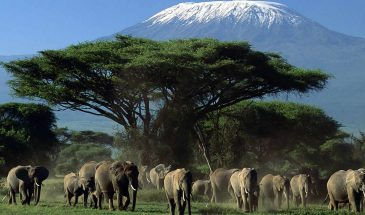 7 Days Amboseli, Tsavo and Mombasa Safari