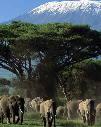 Popular Safaris