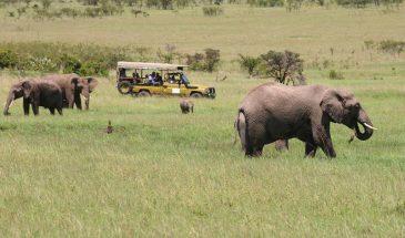 7 Days Safari At Amboseli, Nakuru And Maasai Mara